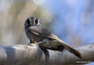 How cute is this bird?